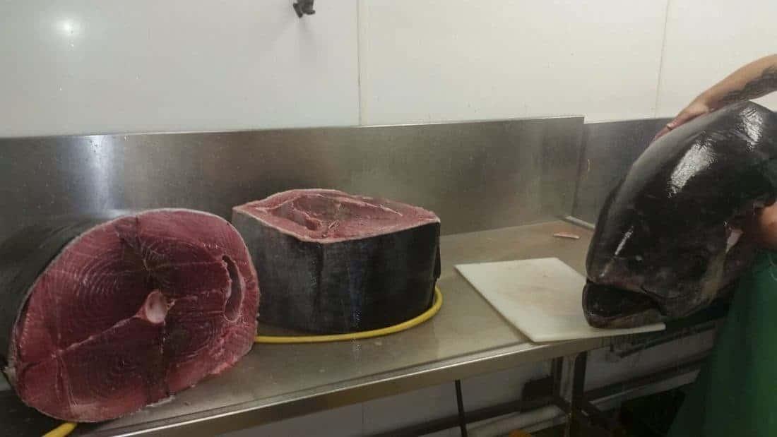Tuna Fish Armstrongs