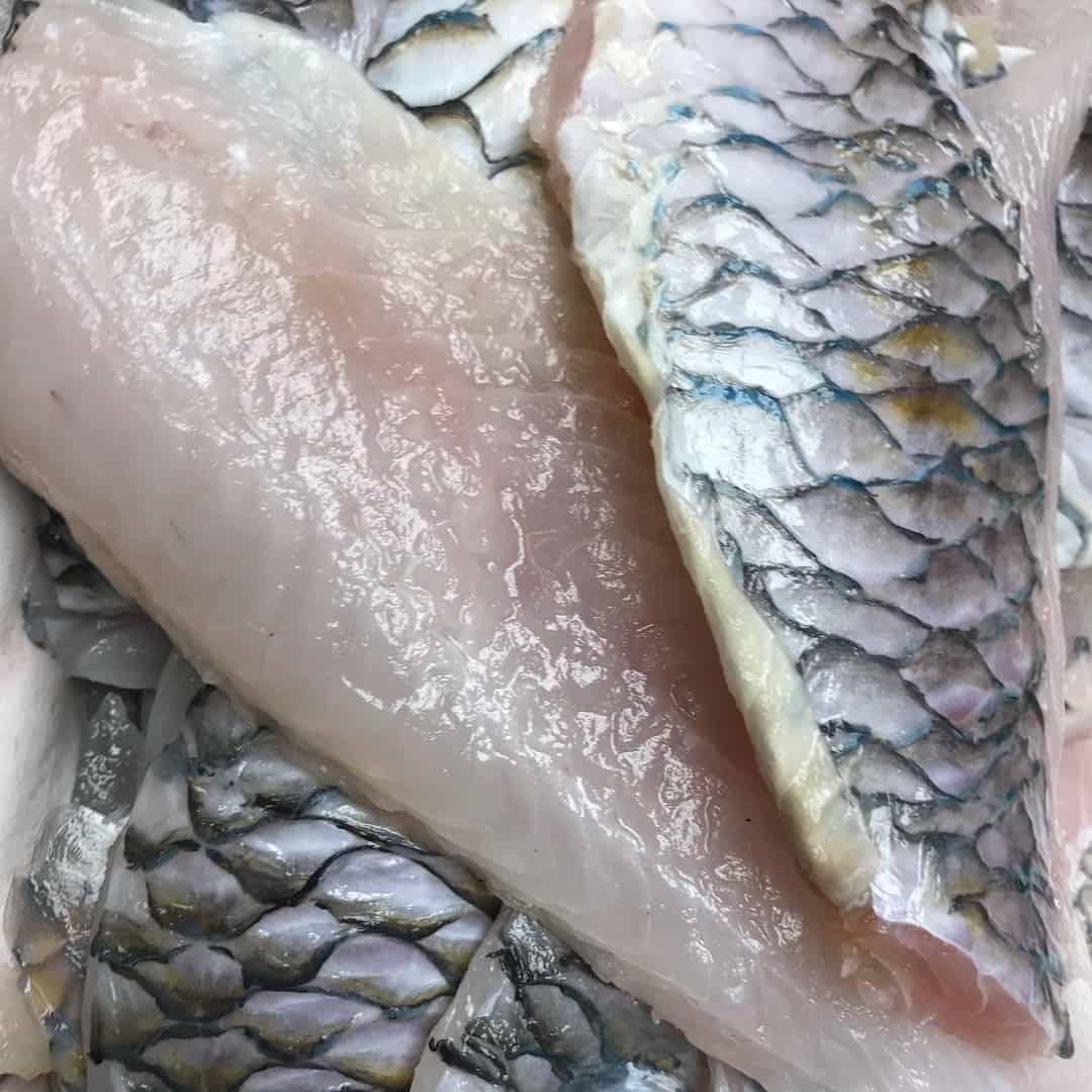Parrot Fish Fillets