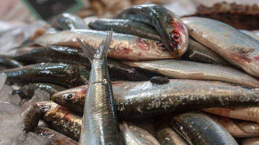 Contact Armstrongs Home of the freshest Sardines