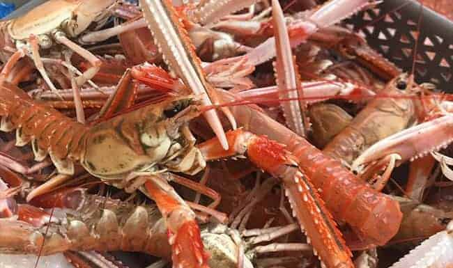 Armstrongs Langoustines