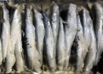 Marinated Anchovy Fillets In Sunflower Oil