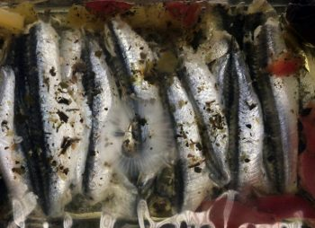 Provencial Marinated Anchovy Fillets In Sunflower Oil